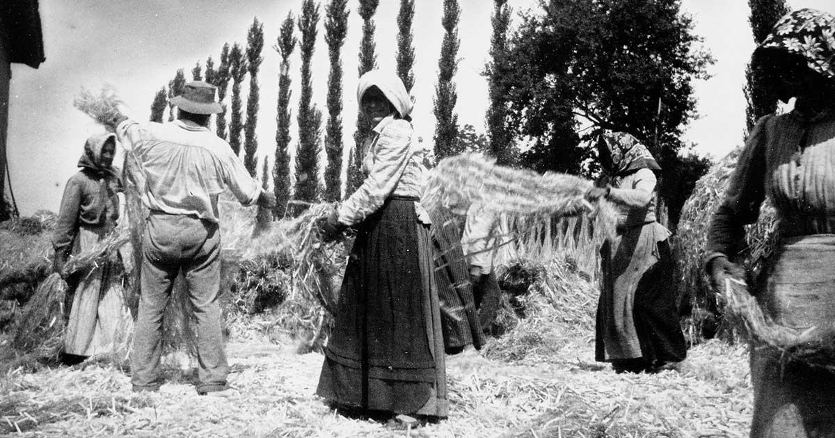produzione e coltivazione canapa light italia